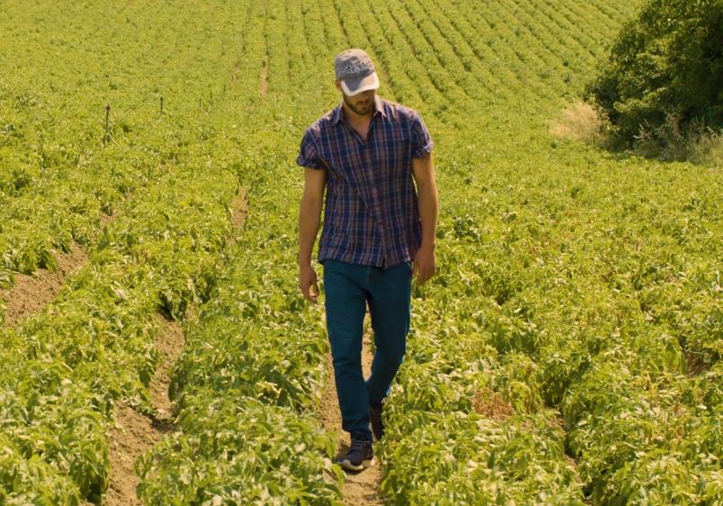 Patata di Bologna DOP - produttore in campo